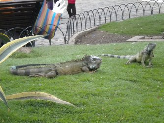 """The """"Iguana Park"""" in Guayaquil"""