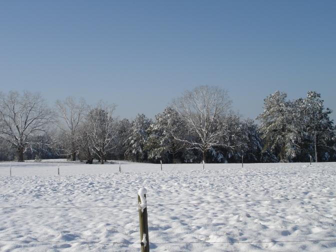 Alabama, field, trees, winter, snow