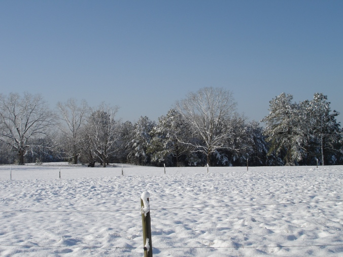 Alabama, field, trees, winter, snow