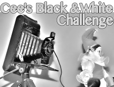 Cee's Black and White Photo Challenge
