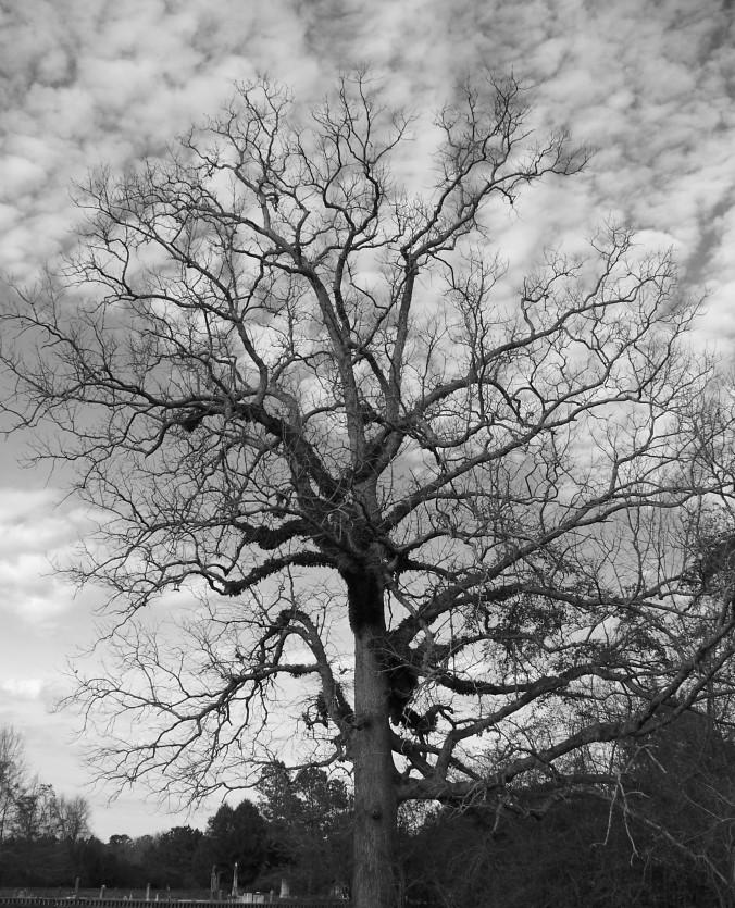 Tree, Alabama