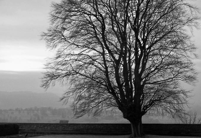 Tree, Stirling, Scotland