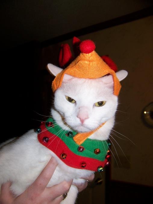 Cat, Christmas, costume