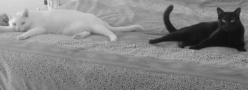 Cat, kitties, pets