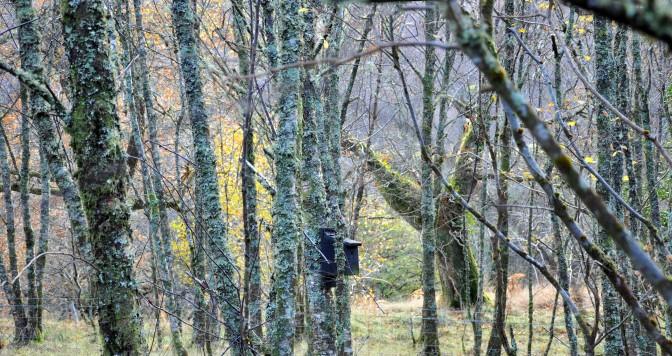 Bird, Glencoe Wood, Scotland