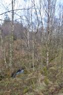 Glencoe Wood, Scotland