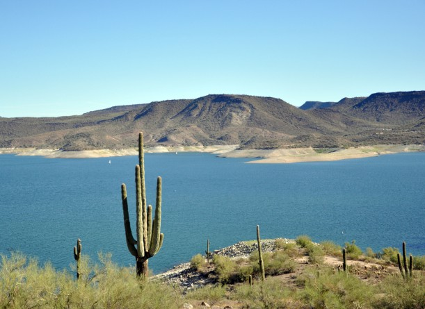 Saguro, cactus, Lake Pleasant, Arizona