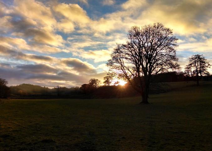 Scotland, Sunset, Tree