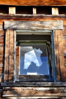 window, horse, arizona