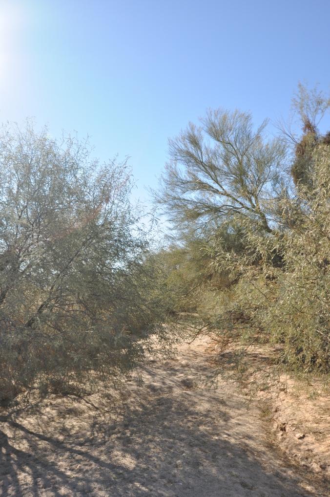 wash, desert, Arizona