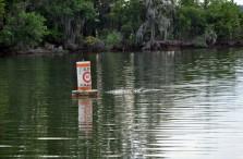 Walter f george lake pondertheirrelevant for Lake eufaula alabama fishing report