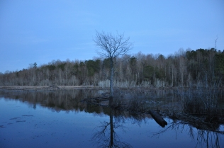 Alabama_Beaver pond