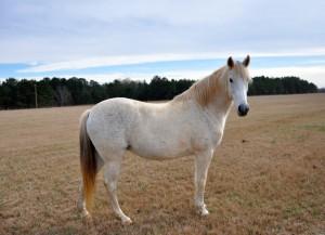 horse, farm, Alabama