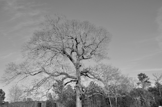 Alabama, tree, black and white