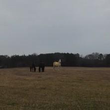 field, horses, instagram