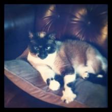 cat, grandma's house, instagram