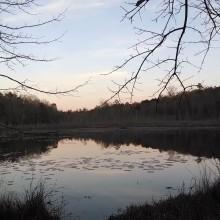 beaver, pond, sunset, instagram
