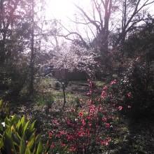 grandma's house, garden, flowers, blooms, instagram