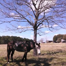 horse, tree, instagram