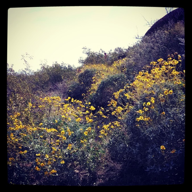 wildflowers, instagram