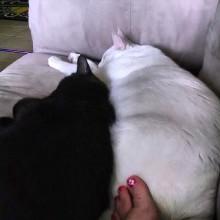 cat, kitties, Oxford, Sadie, instagram