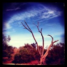 phoenix, arizona, instagram