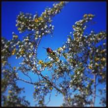 bird, instagram
