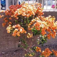 bush, blooms, instagram