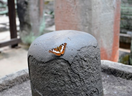 Cambodia, Butterfly on pillar