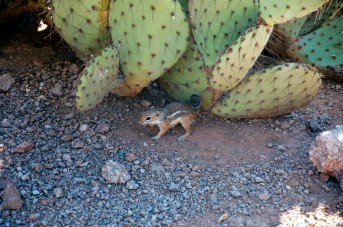 Phoenix, Desert Botanical Garden