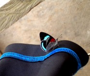 Ecuador, Butterfly
