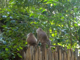 Thailand, Monkeys on fence