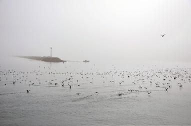 Pacific Ocean California birds in fog
