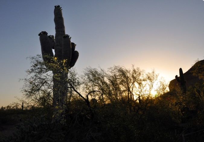 Cactus, Arizona, Sunset