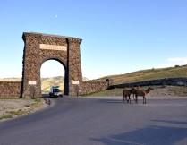 Yellowstone National Park, Roosevelt Arch, Elk