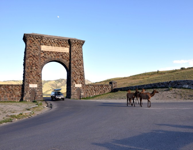 Yellowstone National Park, Roosevelt Arch, Elk