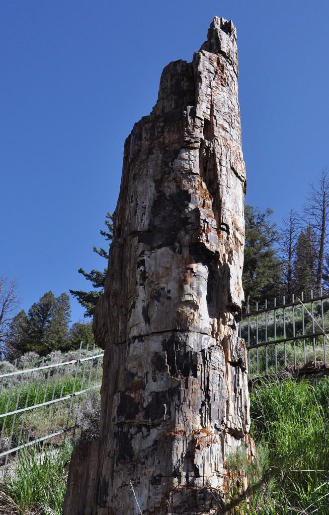 Yellowstone National Park, Petrified Tree