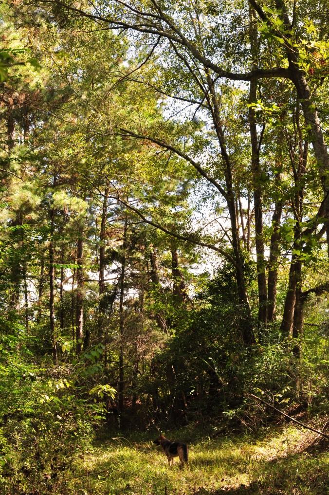 Alabama, wooded path