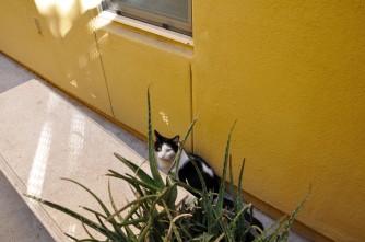 Cat behind plant