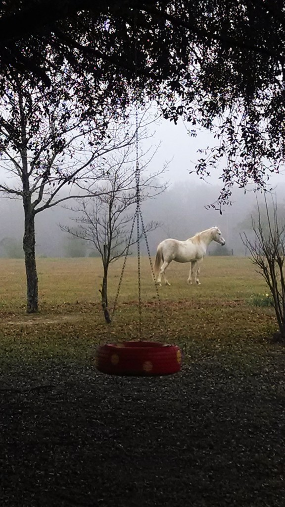 Alabama, foggy morning, horse