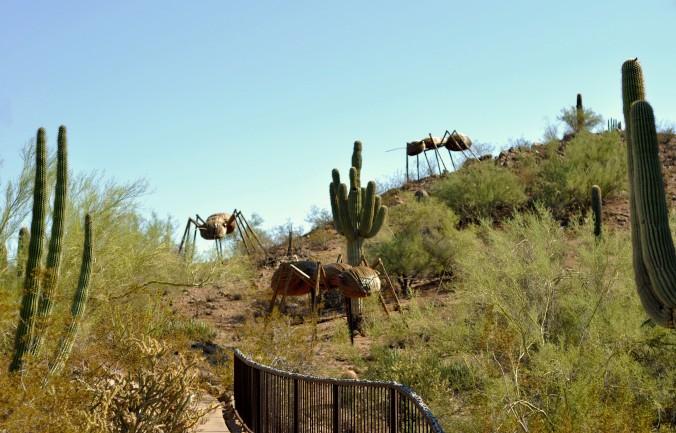 descent, ants, desert botanical garden, arizona