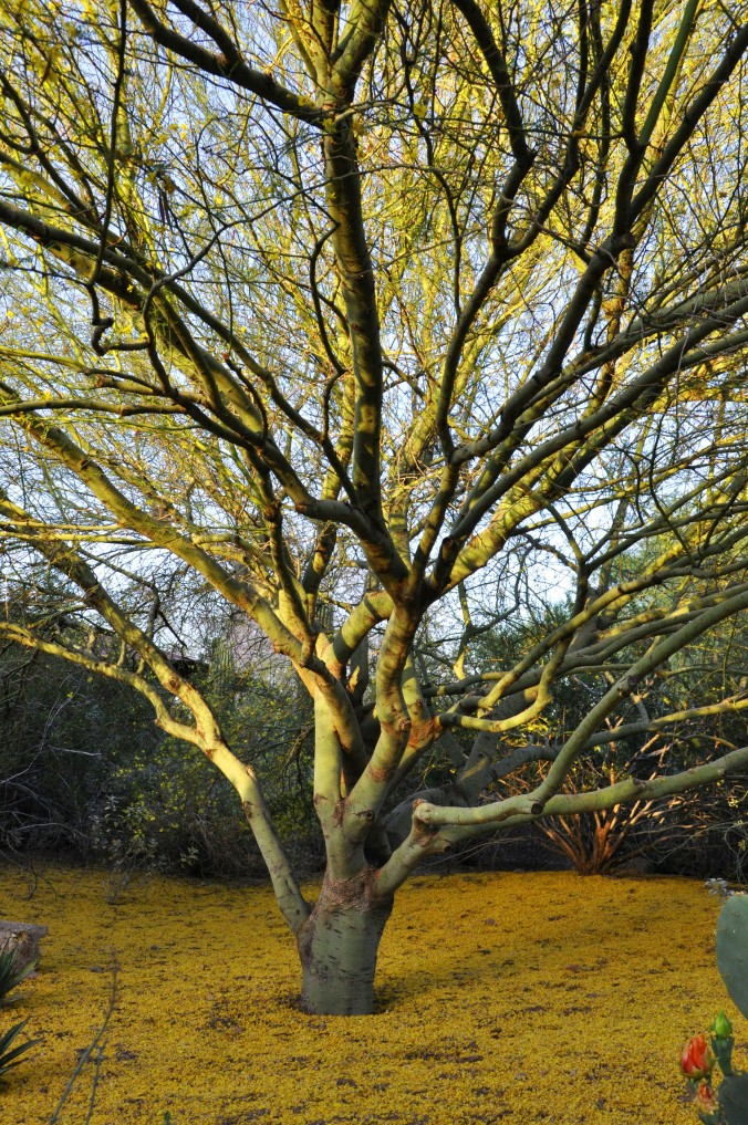 tree with yellow leaves on ground