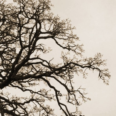 sepia tree limbs against sky