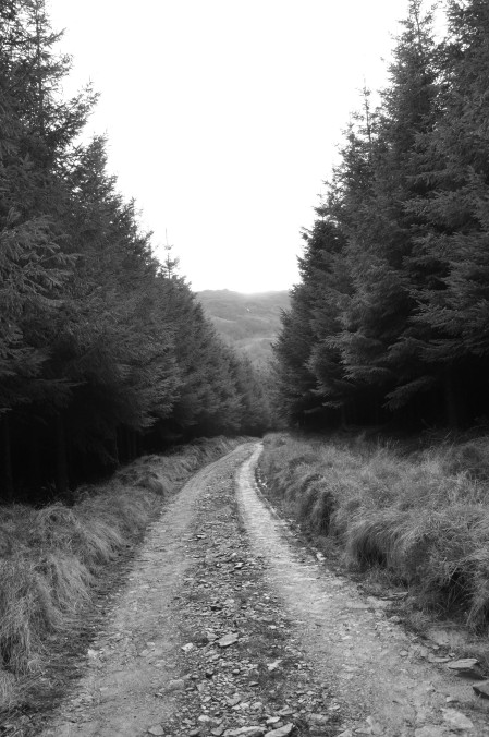 forest roadway black and white