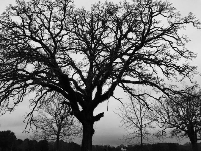 Black and white tree with horse