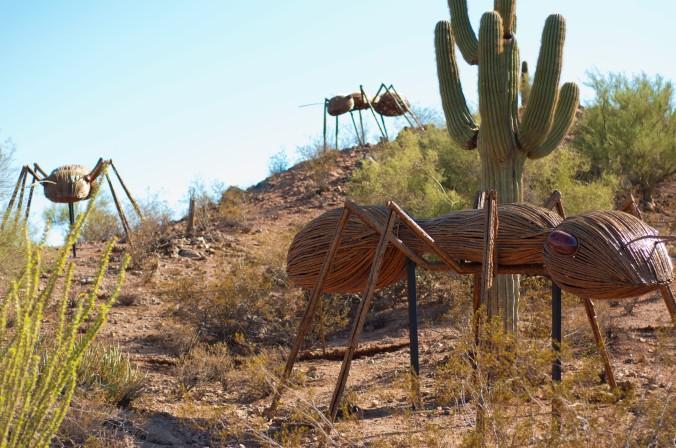 giant ant saguaro Desert Botanical Garden