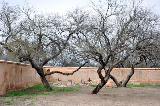 symmetrical trees at tucacori national historic site arizona