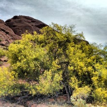 Papago Park Phoenix Arizona