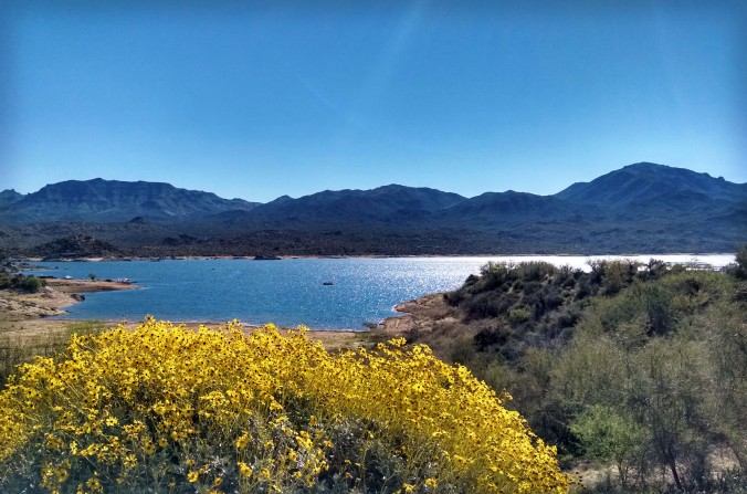 Bartlett Lake Arizona wildflowers