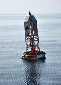 sea life on buoy in pacific ocean